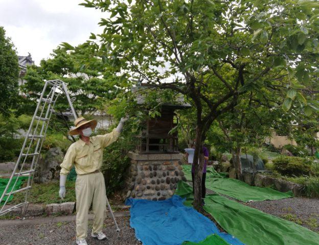 匠の学校 『庭木の剪定講座』を開催しました!